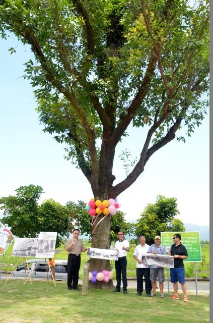 百年尤加利樹 見證三星開發史。(三星鄉公所提供)