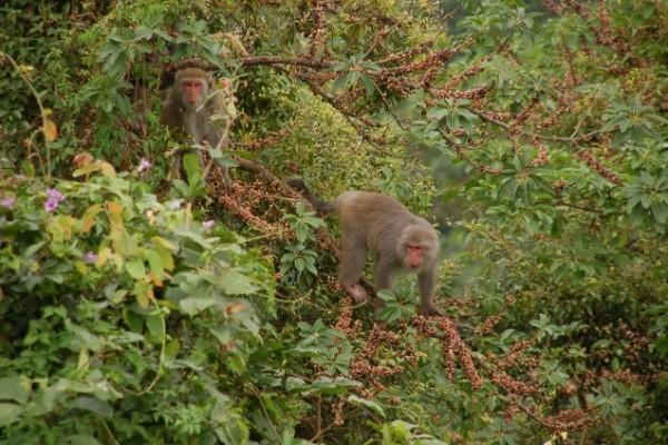 台湾山林'猴'生活特展 认识台湾猕猴