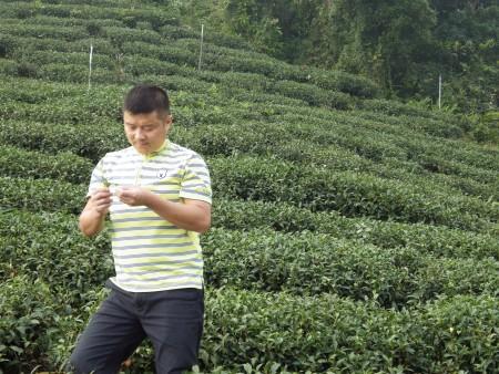 劉充霈堅持從種植無毒茶園做起,3年突破成功。(莊宜真/大紀元)