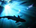 全美国鲨鱼袭击人类事件发生最多的州是佛罗里达,2001至2014年的14年间一共在佛州发生323起鲨鱼袭击事件,其中3人死亡。(大纪元/岑华颖)