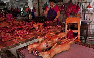 英国《每日电讯报》:中国是否动真格禁止出售狗肉?