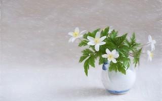 白色的花。(Pixabay)