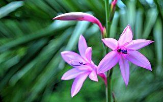 紫色的花。(Pixabay)