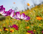 夏天的花。(Pixabay)