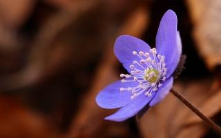 紫色野花。(Pixabay)
