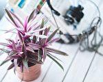 室内盆栽。(Pixabay)