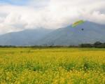 家乡,艳阳天,油菜花铺天盖地,播种过的原野上,春麦茸茸地绿了一层。(大纪元)
