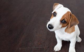 狗狗其實比人更容易中暑。(fotolia)