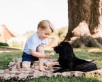 乔治小王子让家中的狗Lupo尝雪糕的滋味。(Matt PORTEOUS/DUKE AND DUCHESS OF CAMBRIDGE/AFP)