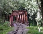 阿里山国家森林游乐区秘境水山巨木步道,是一条结合昔日阿里山森林铁道文化与探访千年神木的步道,仿佛走进森林时光隧道,也是夏天最佳避暑胜地。(嘉义林管处提供)