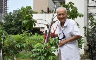 百岁人瑞庄阿龙和他种的果树。(新竹县政府提供)