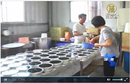陈秀英制作仙草冻。(新唐人电视台撷图)