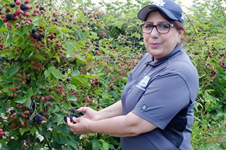 圖:Birak Berry Farm農場女主人Harminder Birak。(李芝毓/大紀元)