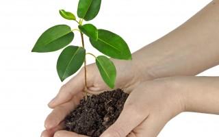 印度北方邦在7月11日举办大型种树活动,试图在一天内种下5,000万棵树,以打破世界纪录。图为一棵树苗。(Fotolia)