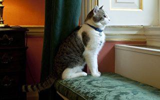 卡梅伦周三离开首相府 这只猫他带不走