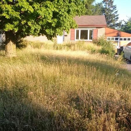多伦多士嘉堡-爱静阁(Scarborough-Agincourt)选区的市议员詹嘉礼说,很多居民让院子里的草一直长下去。(市议员办公室提供)