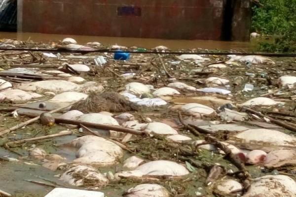 湖北天门扒堤分洪酿人祸 数十万人被洪水围困