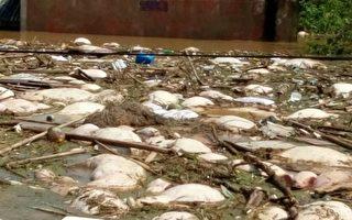 湖北天門市扒堤分洪製造人禍,近90座村莊被淹,數十萬村民被困。圖為村莊受災圖。(村民提供)