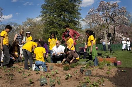 在奥巴马总统执政期间,白宫花园则成为第一夫人米歇尔的菜园。她在后花园种植了各种蔬果,帮助对抗儿童肥胖问题。(网络图片)