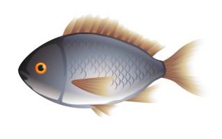 研究顯示,孕婦吃魚能預防早產,還有助於寶寶的智力、認知、學習、語言和視力等發展。(Fotolia)