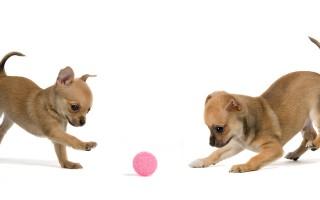 小狗也需要主人幫助防震。(fotolia)