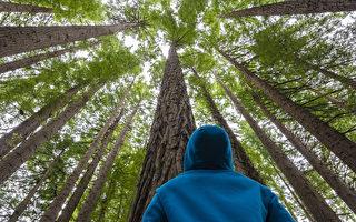 德国专家:树喜欢群居 有鲜为人知的秘密
