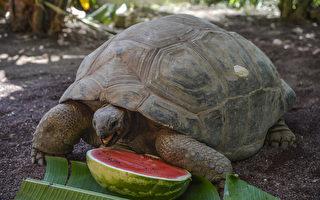 为何叫龟速 离家出走半年的乌龟告诉你