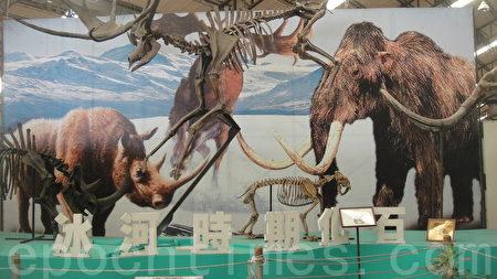 入館內首見即是冰河五寶在迎接,牠們是冰河時期最具代表性的物種。(楊秋蓮/大紀元)