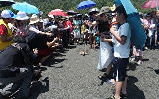 """减塑行动拯救海洋 送海龟""""小叮当""""回大海"""