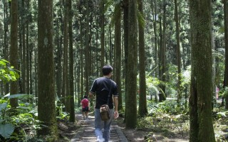 游溪头   森林清幽小径探寻植物科学名人的足迹
