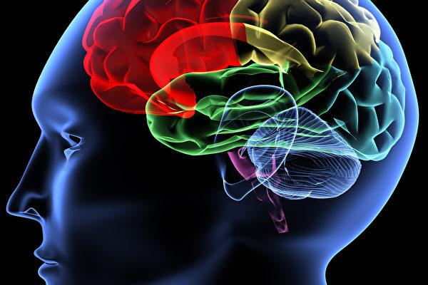 德國弗萊堡大學的研究人員發現,睡眠可使大腦清空記憶連接,空出空間來儲存新的記憶。(Fotolia)