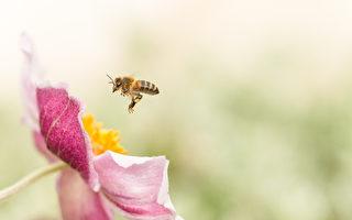 不同花粉.不同选择