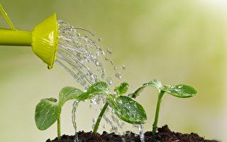 「綠色寵物」當道  2020年室內植物5大趨勢