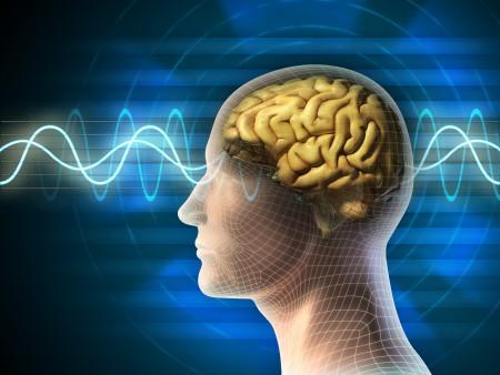 人的大脑被视为最精密的量子计算机,但量子理论仍不足以解释思维的产生。(fotolia)