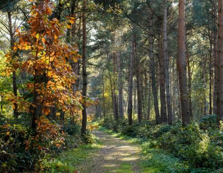 树木可以记录宇宙的信息 (pixabay)