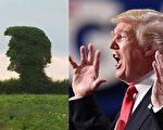 有摄影师在英国乡间发现一棵奇特的大树,外形酷似川普的侧面。(Getty images、视频截图/大纪元合成)