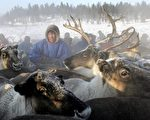 A Nenets herdsman gathers his reindeer as they prepare to leave a site outside the town of Nadym, 3,800 km North-East of Moscow in Siberia to find a new place for stay, 14 March 2005. The Nenets people live in snow and freezing temperatures some 260 days of the year and are mainly nomadic reindeer herdsmen. AFP PHOTO / TATYANA MAKEYEVA / AFP PHOTO / TATYANA MAKEYEVA