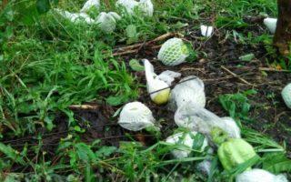 梅姬台风为彰化地区带来严重农业损失。(郭益昌/大纪元)