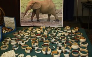 纽约史上最大象牙走私案 市值450万美元