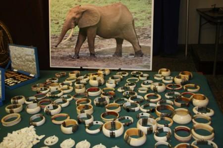 纽约日前破获该州历史上最大一宗象牙走私案,截获价值450万美元的象牙及其制品。(摄影﹕蔡溶/大纪元)