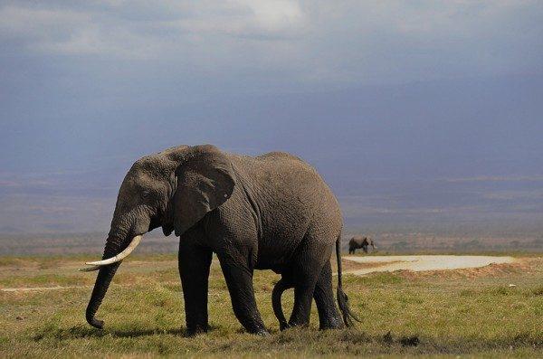 近距離抓拍惹怒大象 意大利遊客被踩死
