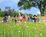 """韩国首尔九里汉江市民公园开满了波斯菊,23日至25日 举行""""第16届波斯菊庆典""""。庆典期间市民们可以漫步在汉江边尽情赏花,还可以观看各种丰富多彩的文艺公演和吃到美味佳肴。(全景林/大纪元)"""