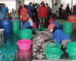 蚵子寮因健全的渔市场拍卖制度,再加上全国首座导入 HACCP,吸引外地区域的渔船到此卸鱼交易。(杨秋莲/大纪元)