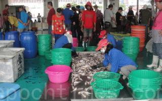 蚵子寮因健全的漁市場拍賣制度,再加上全國首座導入 HACCP,吸引外地區域的漁船到此卸魚交易。(楊秋蓮/大紀元)