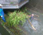路树倾倒、断裂坠于河道中,中市水利局全区动员清理,严防树枝阻塞排水。(台中市政府提供)