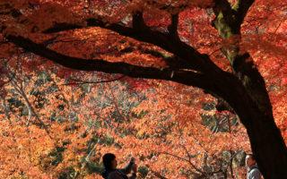 票选日本十大最佳赏枫地点 京都第一