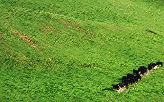 澳洲拒絕讓中共成為第二大外國農場主