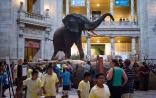 史密森尼博物館的一個分支——坐落於紐約中央公園旁邊的美國自然歷史博物館。(Robert Nickelsberg/Getty Images)