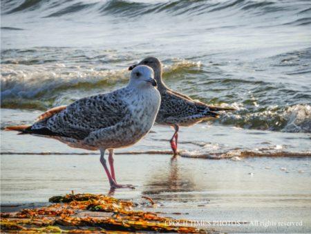 海邊散步的水鳥(清颻/大紀元)