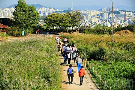 10月初的首尔蓝天公园风光秀丽,站在展望台最高处,抬头可见白云蓝天,低头可将首尔全景尽收眼底。轻盈漫步在一片广阔的紫芒花田里的游客们被浪漫秋色陶醉。(全景林/大纪元)